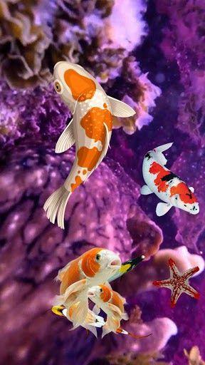 Download Koi Fish Wallpaper 3d Water Fish Screensaver 3d Coral Fish 3d Live Wallpaper For Android Phones And Tablets Fish Wallpaper Fish Screensaver Koi Fish