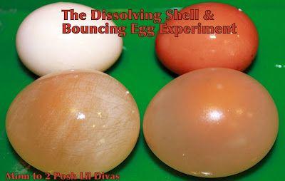 Mom to 2 Posh Lil Divas: The Dissolving Egg Shell & Bouncing Egg Experiment