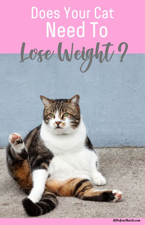 eb81aa3ab2ec31e2bfd61a283167f61d - How To Get My House Cat To Lose Weight