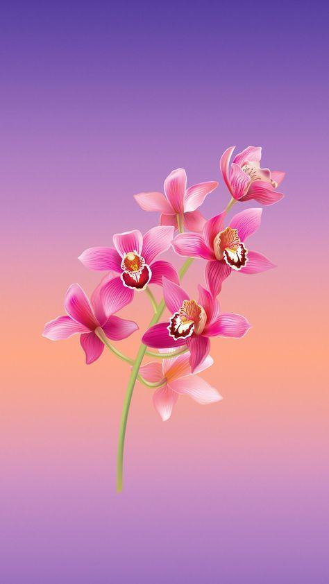 Epingle Par Ravindra Kumar Ahirwar Sur Wallpaper Fond D Ecran Abstrait Fond D Ecran Fleur Rose Fond D Ecran Colore