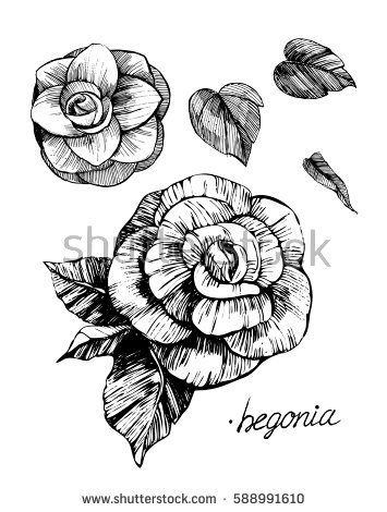 Image Result For Draw A Begonia Step By Step Flower Drawing Flower Sketches Begonia