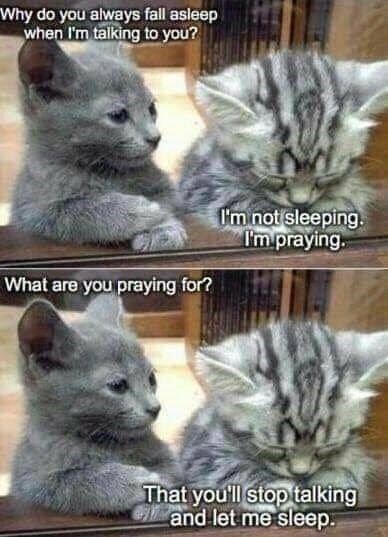 60 New Hot Funniest Cat Memes To Welcome 2020 Funny Animal Memes Cute Funny Animals Funny Cat Memes