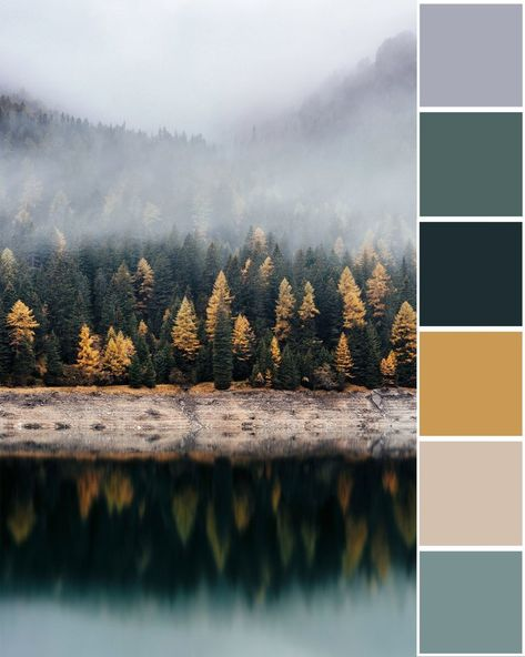 Foggy, moody view of the forest in the Pacific Northwest with trees changing colors in the fall Scheme Color, Colour Pallette, Colour Schemes, Color Combos, Interior Color Schemes, Sunset Color Palette, Sunset Colors, Forest Color, Colour Board