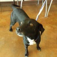 Austin Animal Center In Austin Texas Natural Dog Beagle Puppy