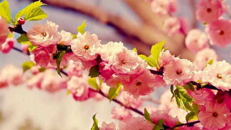 Most Beautiful Pink Flowers 1920x1080 Album On Imgur