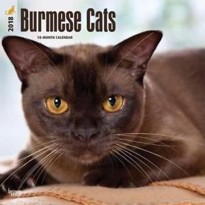 Beautiful Burmese Glossy Coats Prized Amber Eye Colour And A Wonderful Loving Temperament Burmese Cat Cats Cat Ages
