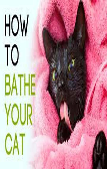 13 Essential Tips For Bathing Your Cat Cat Guides Cats Kitten Long Haired Cats