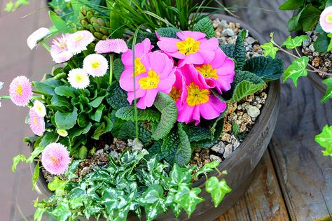 Inspirational Ein praktischer Helfer zum Pflanzen von Blumenzwiebeln Gefunden auf tom garten de Fr hjahrsbl her f r Beet und Balkon Pinterest
