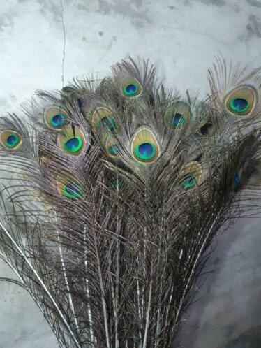 Pauwenveren Pauwenveer Oog Set 3 Stuks Naturel Xl Struisvogelveren Pauwenveren Vleugels Marabou Boa Aan De Pun In 2021 Pauwenveer Struisvogelveren Vleugels