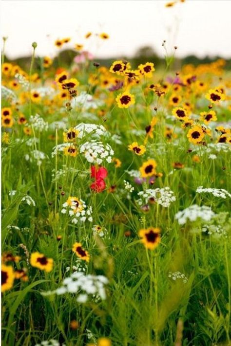 no grass JustSeed British Wild Flowers for Lawns - 4g
