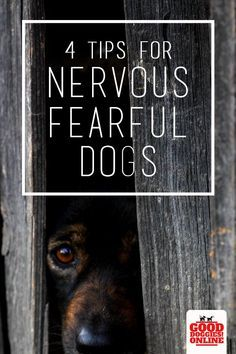 4 Tips For Nervous And Fearful Dogs Dog Training Aggressive Dog