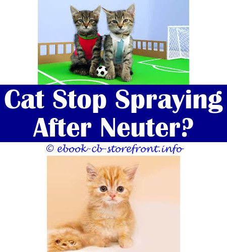 Pin En Cat Spray Natural Remover