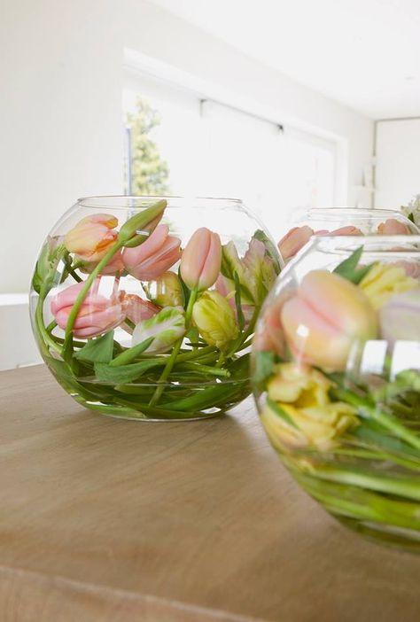 Wil je een tulp gebruiken in een bijzondere of gebogen vaas? Geef de bloem dan een nachtje geen water. De steel wordt dan slap, waarna je hem in de gewenste vorm kan buigen. Geef de tulpen daarna weer water, de steel behoudt dan zijn gebogen vorm.