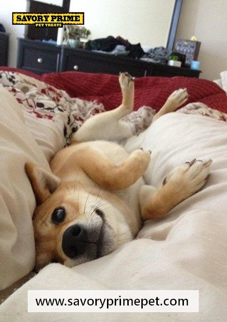 What Are Dogs Sleeping Patterns In 2020 Sleeping Dogs Dog Illnesses Dogs