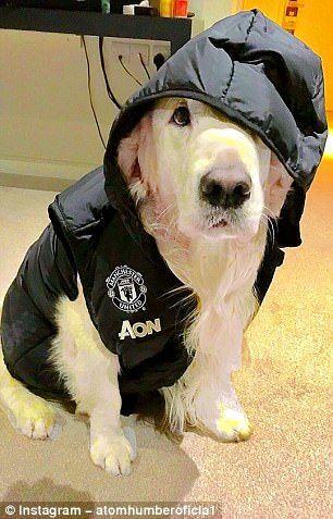 Man United Striker Marcus Rashford Shows Off New Pup Animal