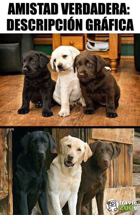 Los Mejores Amigos Son Los Que Estan Juntos Desde Pequenos Perros Frases Chistes De Perros Memes Perros