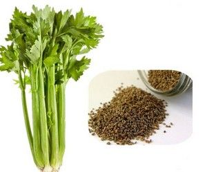 بذور الكرفس Herbs Celery Vegetables