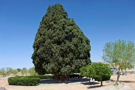 Sarv-e Abarqu, Iran http://bit.ly/1bXYFQr