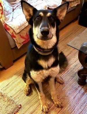 Adopt Poppy On German Shepherd Dogs Dogs Baby Dogs