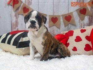 Petland Texas In 2020 Cute Animals Puppies Animals