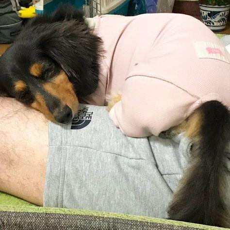 #この股にはさまる感じ #いい気持ち #おやすみ #しっぽがでろーん #よく寝る子   #この股にはさまる感じ #いい気持ち #おやすみ #しっぽがでろーん #よく寝る子