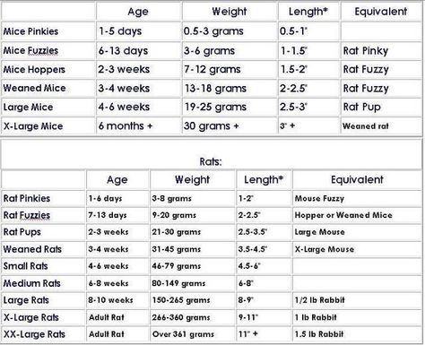 Bearded Dragon Food Chart X3cbx3ebearded Dragon Feeding Schedule