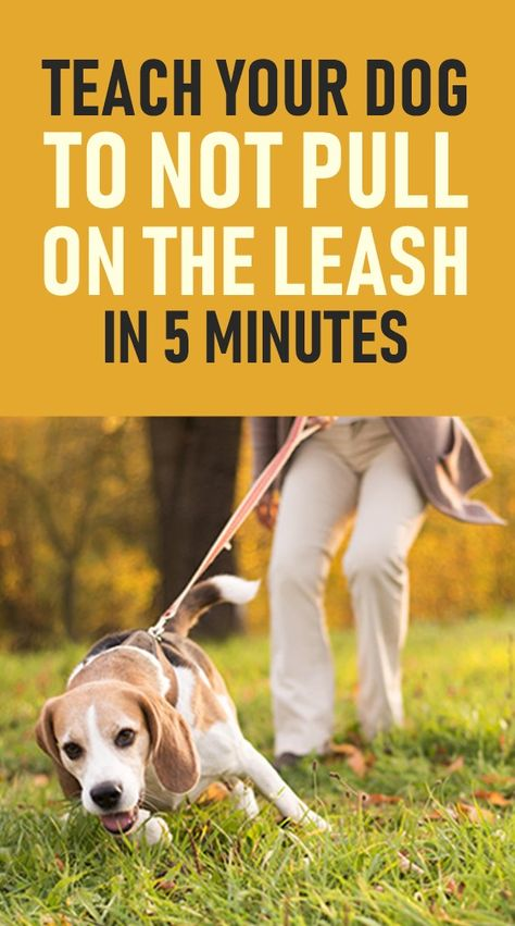 Teach A Dog To Not Pull On The Leash