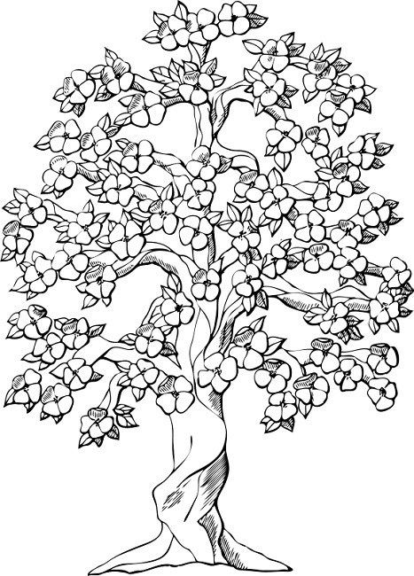 Flowering Dogwood Drawing Flower Coloring Pages Geometric