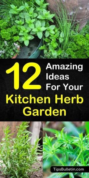 12 Amazing Ideas For Your Kitchen Herb Garden Herb Garden In