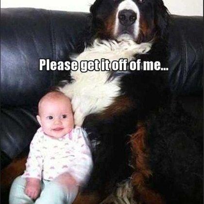 Funny Dog Memes Clean Funny Dog Memes 2018 Dog Meme Face Cute Dog Memes Dog Memes Best Dog Memes Dog Memes Clean Funny Dogs Animal Memes Clean