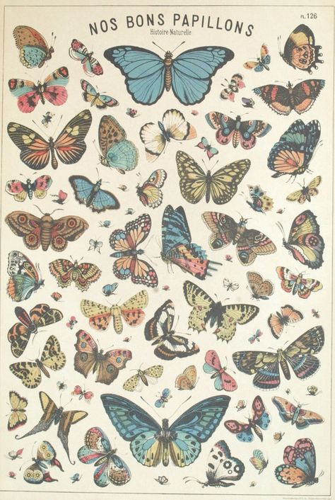 Butterfly Discover Butterfly Poster - Insect Art - French Butterflies Print - Diagram Chart Wall Art Home Decor Fine Art Print Art Inspo, Kunst Inspo, Inspiration Art, Illustration Botanique, Botanical Illustration, Butterfly Illustration, Graphic Illustration, Vintage Butterfly, Butterfly Art