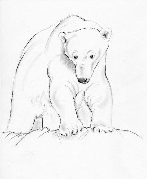 Halten eisbären winterschlaf