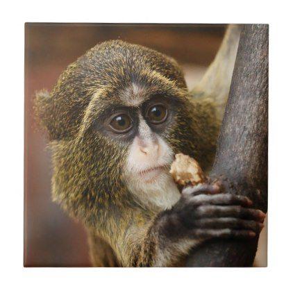 Monkey Climbing Tree Photo Tile Zazzle Com In 2021 Animals Africa Animals Cute Monkey