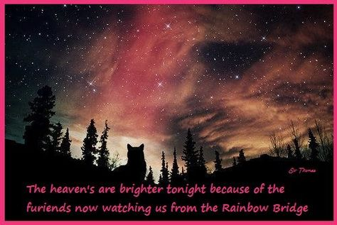 ♥ The heavens are brighter tonight because of the furiends now watching us from the Rainbow Bridge.