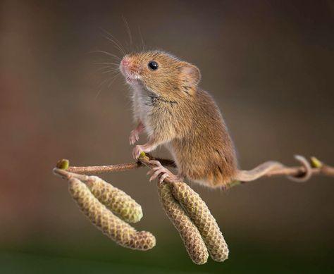 28 Teeny Tiny Wild Mice