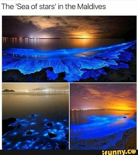 """It turns out that putting a certain type of plankton under stress results in one of the most stress-relieving sights on the planet, their resultant blue glow creating astral patterns on sea shores Vacation Places, Dream Vacations, Romantic Vacations, Italy Vacation, Honeymoon Destinations, Romantic Travel, Italy Travel, The Places Youll Go, Cool Places To Visit"