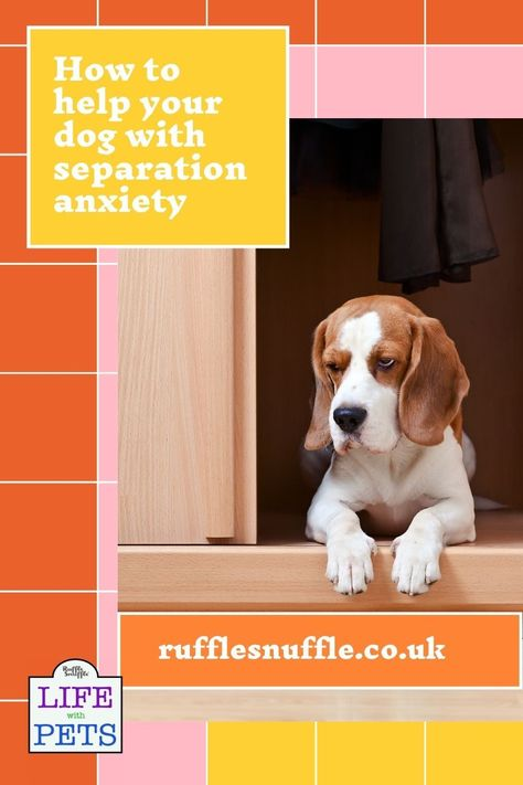 How to avoid separation anxiety in your dog : Life after lockdown - by Ruffle Snuffle