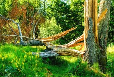 Download Nature Forest Trees Broken Tree High Quality Hd Wallpaper High Quality Hd Wallpaper In 2k 4k 5k 8k 10k Resolution For Your Hd Wallpaper Tree Wallpaper