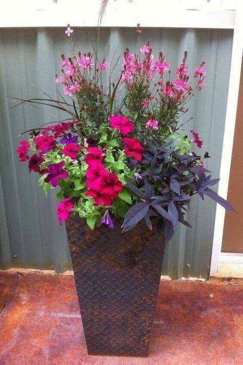 Flower Gardens Basic Guide Floweringplants Flower Pots Outdoor Container Flowers Container Plants