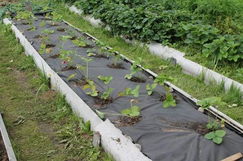 огород под спанбондом