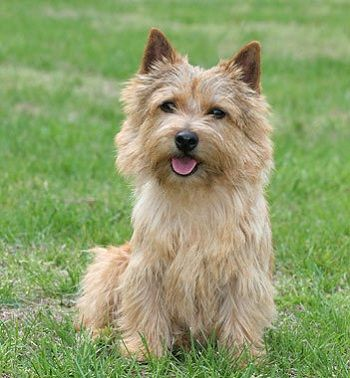 60 Dog Breeds That Don T Shed Small Medium Large Breeds Dog
