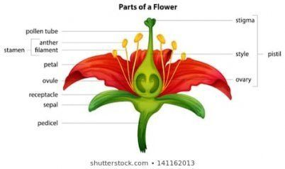 Heres What No One Tells You About Flower Labeled Flower Labeled Https Ift Tt 2l4hqc5 Parts Of A Flower Flower Structure Flower Pictures