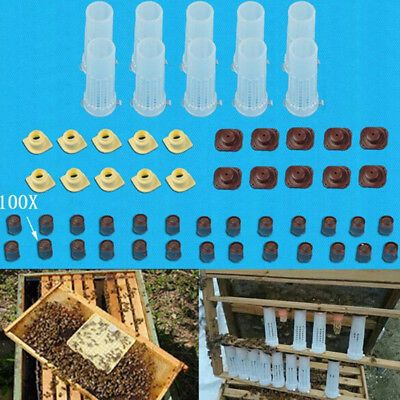 Complete queen rearing cup kit system bee beekeep catcher box /& 100 cell cups.cx