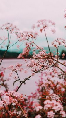 Wallpaper Tumblr Pink In 2020 Hd Pink Wallpapers Flower Phone Wallpaper Flower Iphone Wallpaper