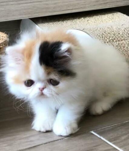 Pin Van Louisekockx Op Poesjes En Kittens Katten En Kittens Kittens Katten
