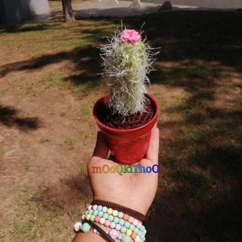 #cactus #viejito #gumis #amigurumis #amigurumi  #detalle #tejido #hechoamano #aguascalientes #Mexico #amor #manualidades #crochet #crocheting #lovecrochet #love #crochetlove #craft #handmade #amigurumilove #yarn #crocheted #artesania  #lovecrochet #crochetlove #handmade #crocheted #detalles #crochetiando