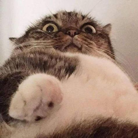 Cats Caught in the Act Trying to Open Phones (Photos) - I Can Has Cheezburger?