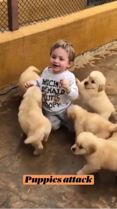 Puppies attack