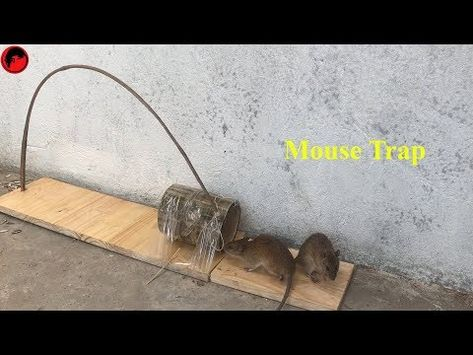 How To Make Mouse Trap - Easy Mouse Trap Using Plastic Bottle
