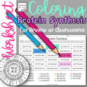 Pin On Products Protein synthesis review worksheet answers